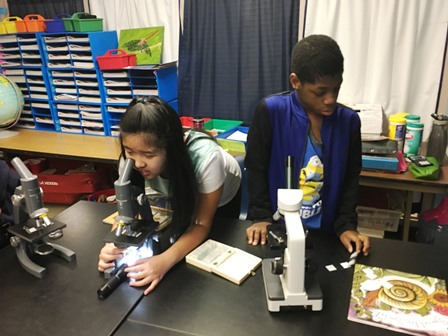 students participating in science experiments with microscopes